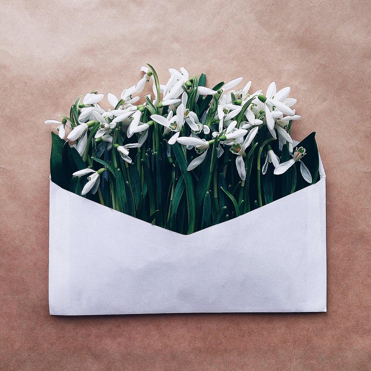 Картинки, открытки цветы в конверте
